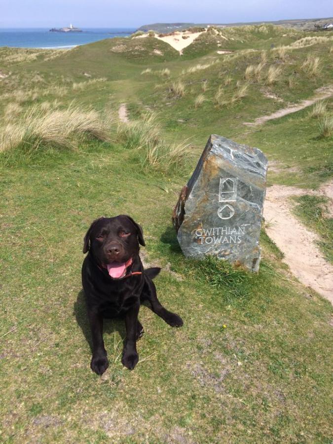 Gwithian Towans dog walk