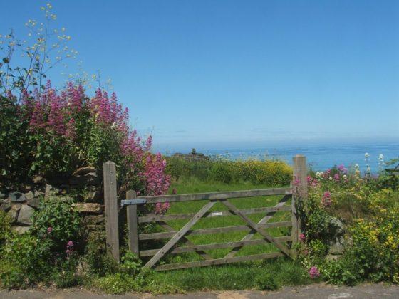 coastal walk, st ives, cornwall