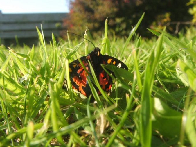 butterfly in the garden