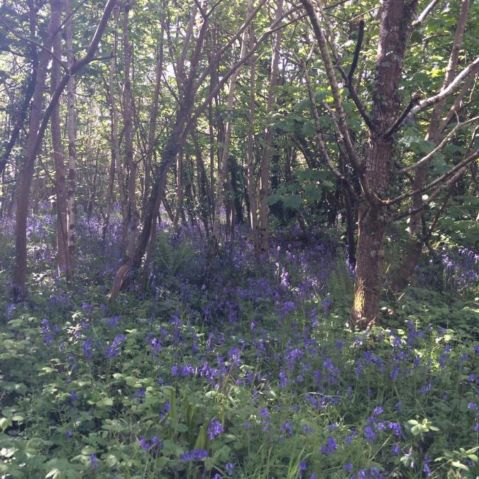 Tehidy Woods, Cornwall