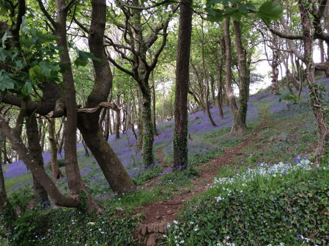 Bluebell Dell, Penzance, Cornwall