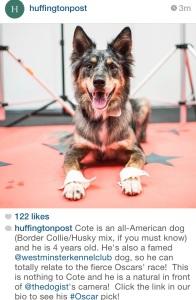huffingtonpost instagram