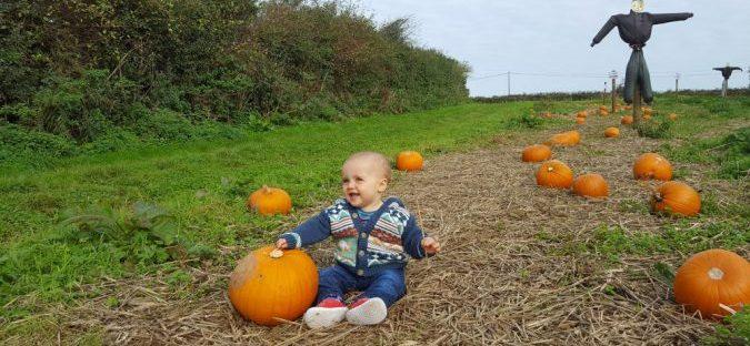trevaskis farm pumpkin patch
