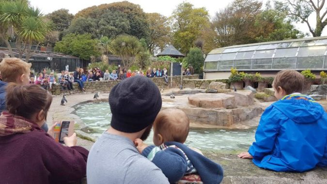 luke and jenson with penguins