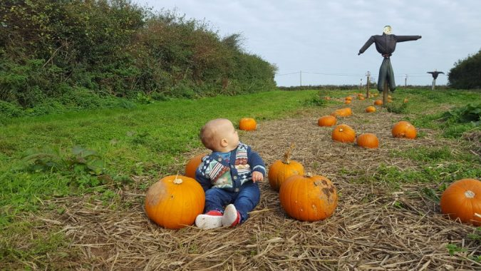 trevaskis farm pumpkin patch