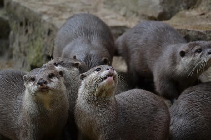 newquay zoo