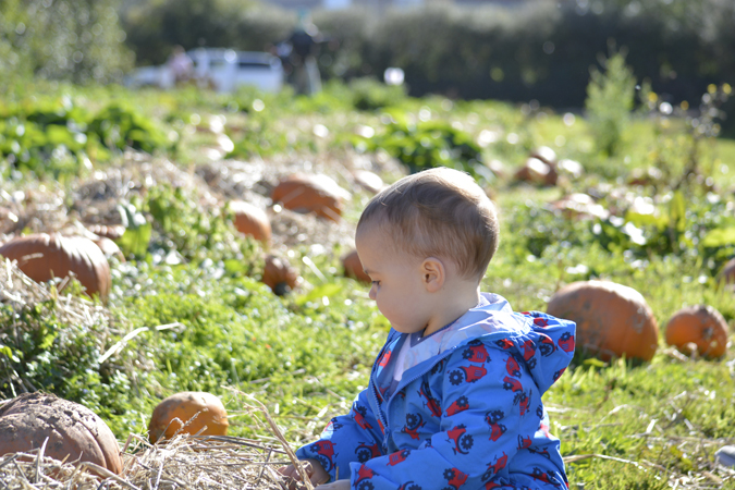 jenson pumpkin patch 2017