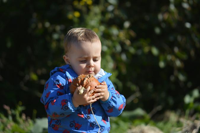Jenson Trevaskis Farm pumpkin patch