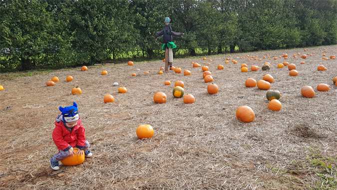 Trevaskis Farm pumpkin patch 2018