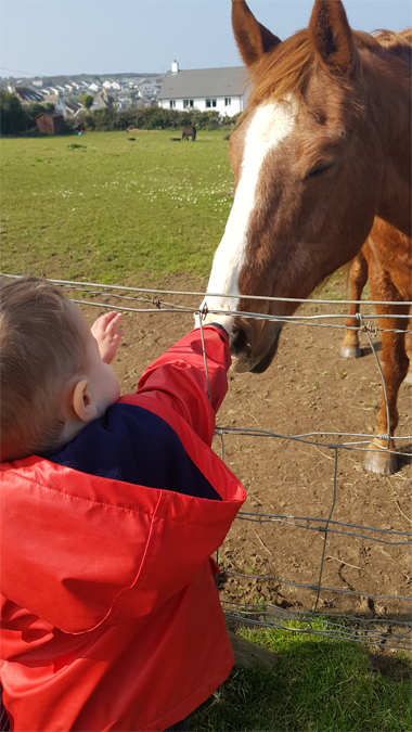 Making friends with a horse