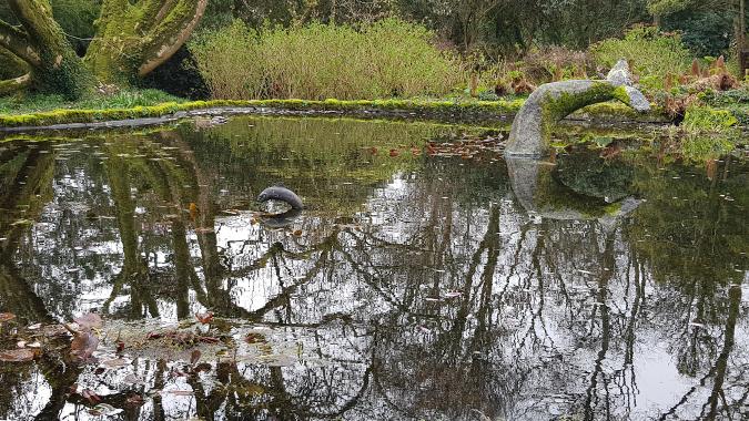 Trewidden Garden, Penzance