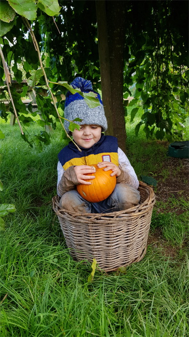 Trevaskis Farm pumpkin patch 2019